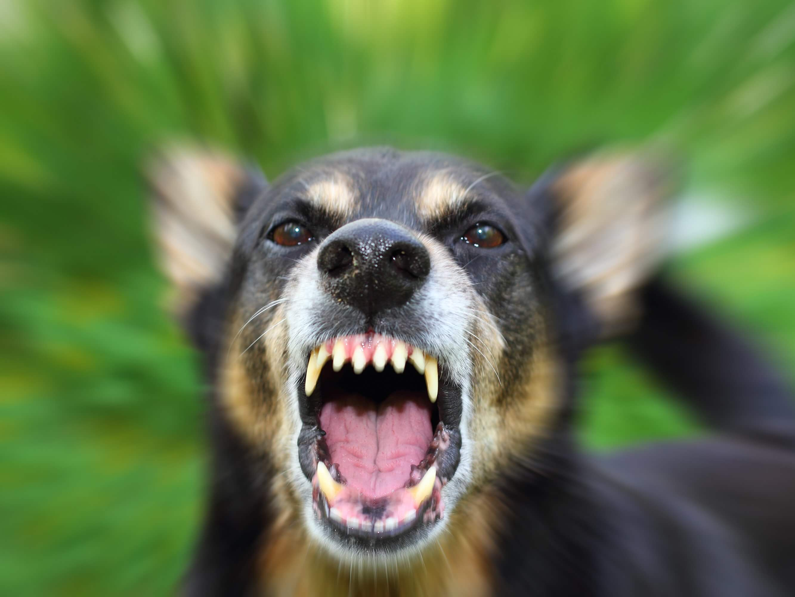 Filing Dog Bite Lawsuits When Children are Attacked